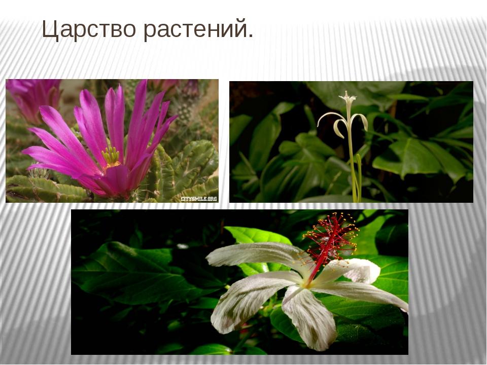 Царство растений.