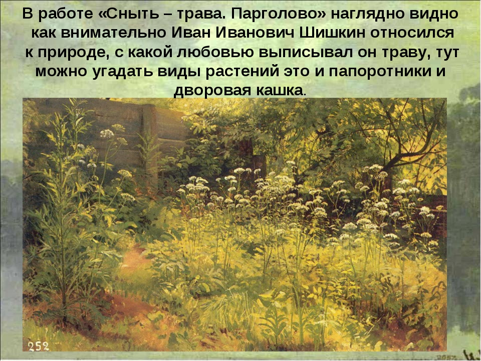 В работе «Сныть – трава. Парголово» наглядно видно как внимательно Иван Ивано...