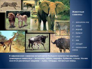Животные саванны 1 – антилопа гну 2 – зебра 3 – жираф 4 – буйвол 5 – слон 6 –