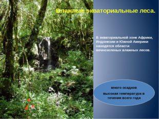 Влажные экваториальные леса. В экваториальной зоне Африки, Индонезии и Южной