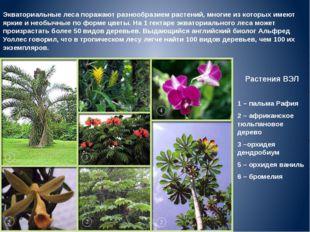 Растения ВЭЛ 1 – пальма Рафия 2 – африканское тюльпановое дерево 3 –орхидея д
