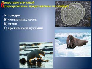 6 Представители какой природной зоны представлены на слайде? А) тундры Б) сме