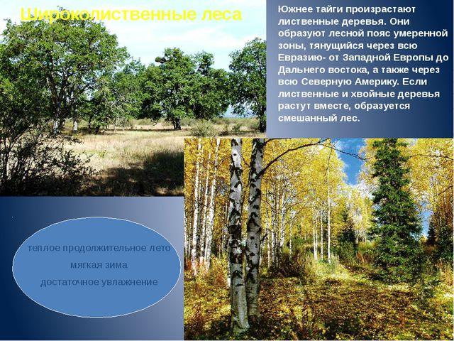 Южнее тайги произрастают лиственные деревья. Они образуют лесной пояс умеренн...