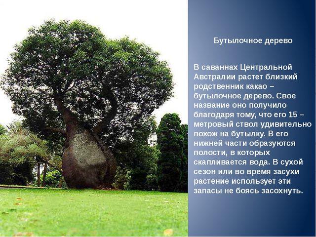 Бутылочное дерево В саваннах Центральной Австралии растет близкий родственник...
