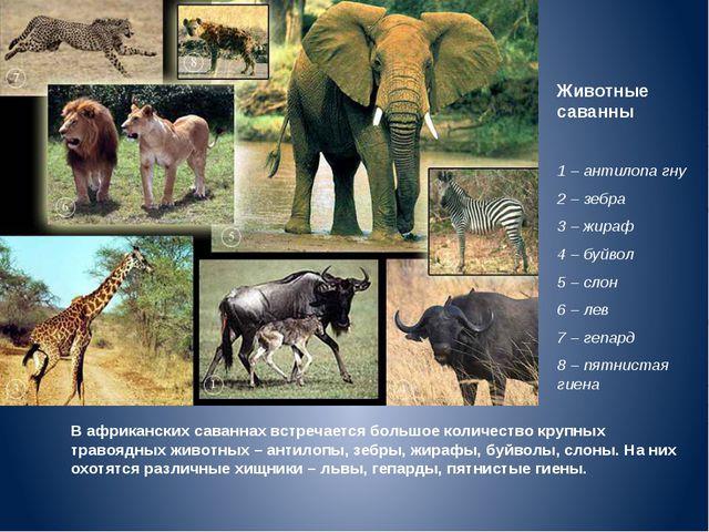 Животные саванны 1 – антилопа гну 2 – зебра 3 – жираф 4 – буйвол 5 – слон 6 –...