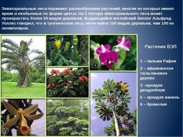 Растения ВЭЛ 1 – пальма Рафия 2 – африканское тюльпановое дерево 3 –орхидея д...