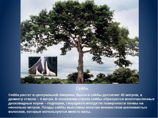 Сейба. Сейба растет в центральной Америки. Высота сейбы достигает 45 метров,...
