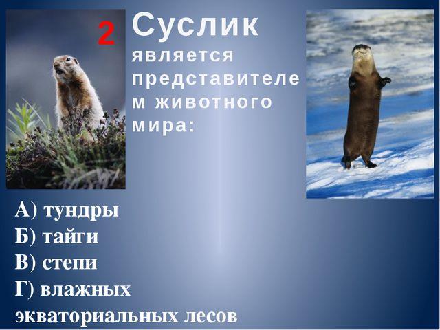 Суслик является представителем животного мира: А) тундры Б) тайги В) степи Г)...