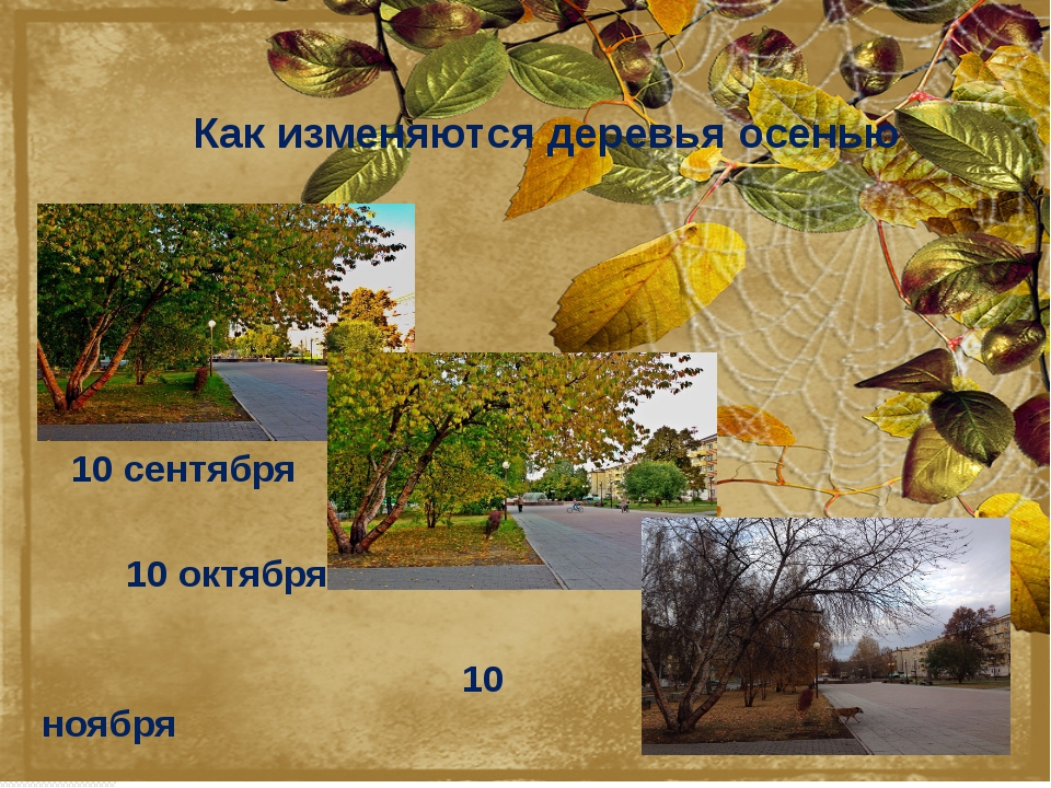 Как изменяются деревья осенью 10 сентября 10 октября 10 ноября