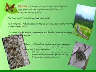 Проблема: В Костанайской области сотни деревьев поражены опасным карантинным
