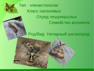 Тип членистоногие Класс насекомых Отряд чешуекрылых Семейство волнянок Род/В
