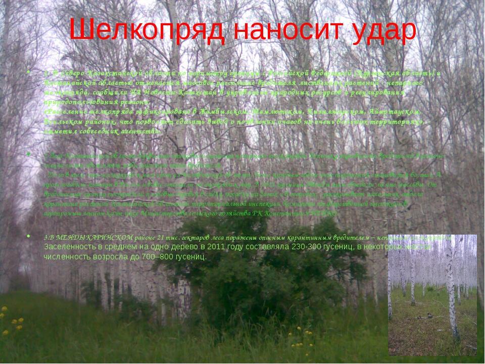 Шелкопряд наносит удар 1. В Северо-Казахстанской области по периметру границы...