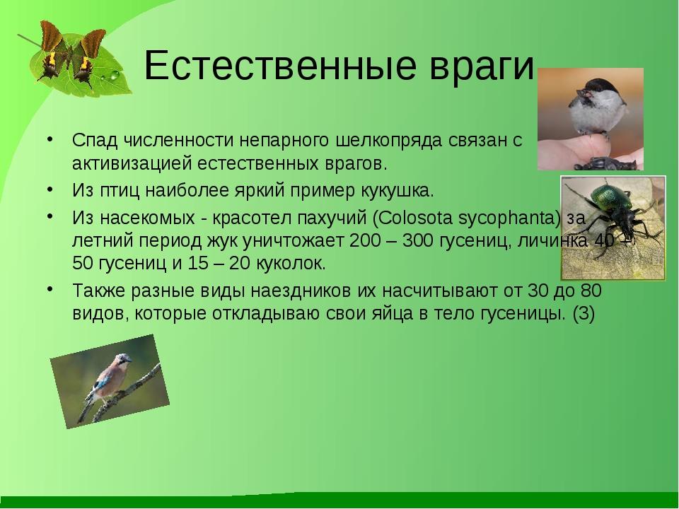 Естественные враги Спад численности непарного шелкопряда связан с активизацие...