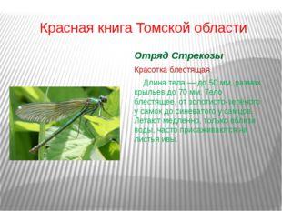 Красная книга Томской области Отряд Стрекозы Красотка блестящая Длина тела