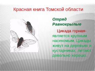 Красная книга Томской области Отряд Равнокрылые Цикада горная- является кру