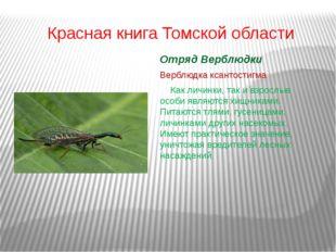 Красная книга Томской области Отряд Верблюдки Верблюдка ксантостигма Как ли