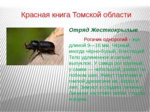 Красная книга Томской области Отряд Жесткокрылые Рогачик однорогий - жук дл