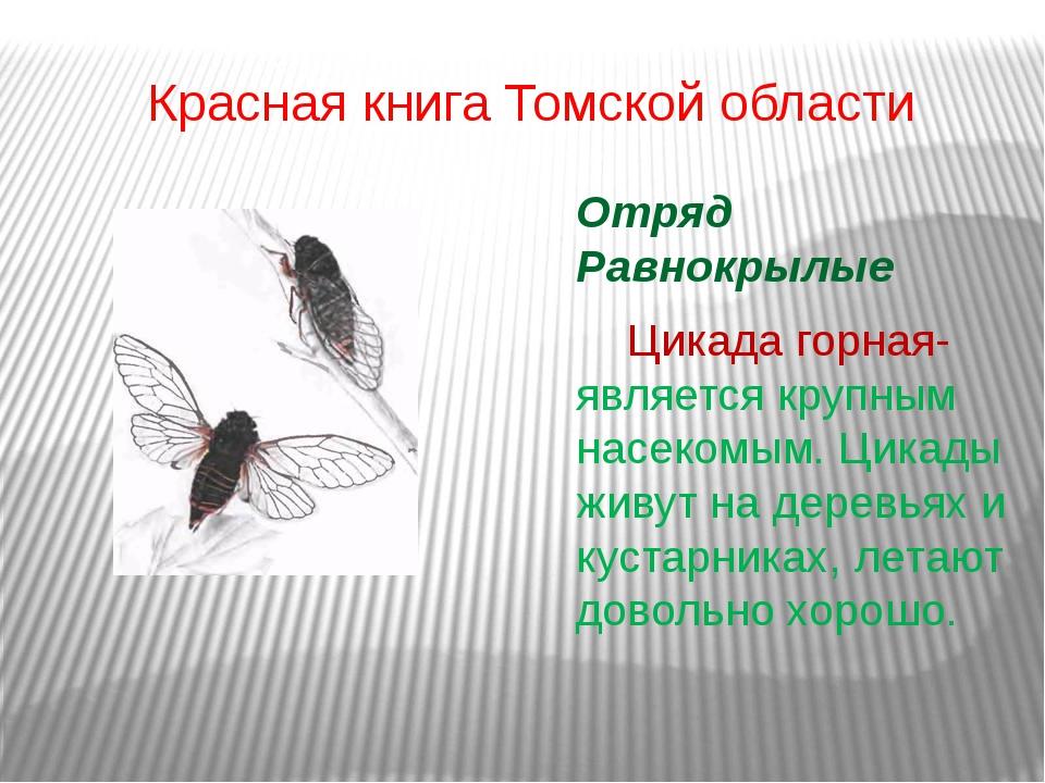 Красная книга Томской области Отряд Равнокрылые Цикада горная- является кру...