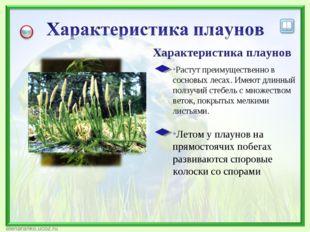 Характеристика плаунов Летом у плаунов на прямостоячих побегах развиваются сп