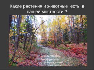 Какие растения и животные есть в нашей местности ?