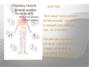 КЛЕТКИ. Всё наше тело состоит из маленьких клеточек, и каждая клеточка за чт