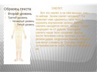 СКЕЛЕТ. Вот это скелет, а на нём мышцы, они – то мягкие. Зачем скелет челове