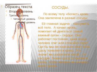 СОСУДЫ. По всему телу «бегает» кровь. Она заключена в разные сосуды. Её глав