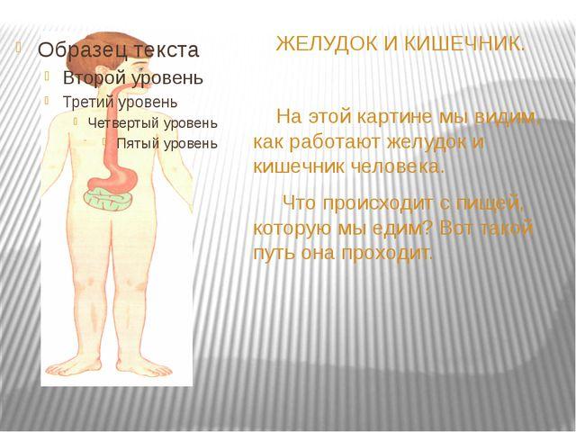 ЖЕЛУДОК И КИШЕЧНИК. На этой картине мы видим, как работают желудок и кишечни...