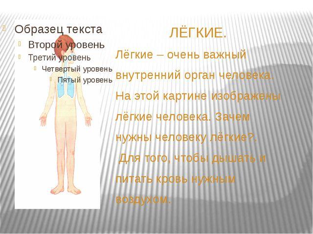 ЛЁГКИЕ. Лёгкие – очень важный внутренний орган человека. На этой картине изо...