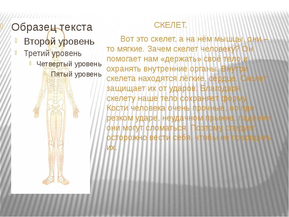 СКЕЛЕТ. Вот это скелет, а на нём мышцы, они – то мягкие. Зачем скелет челове...