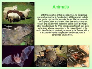With the exception of two species of bat, no indigenous mammals are native t