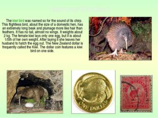 The kiwi bird was named so for the sound of its chirp. This flightless bird,