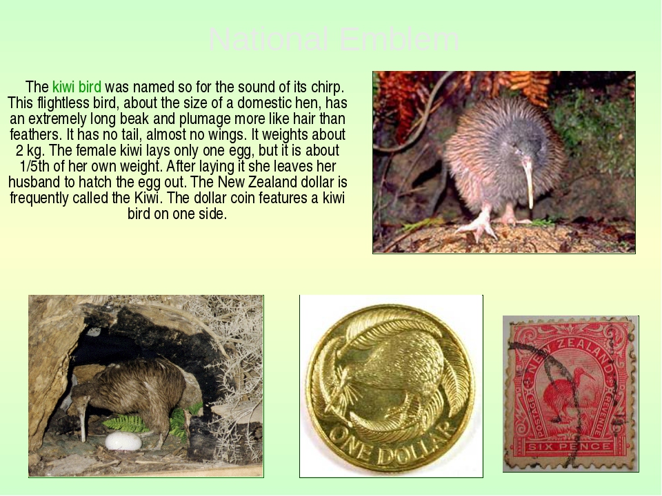The kiwi bird was named so for the sound of its chirp. This flightless bird,...