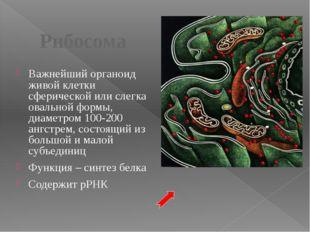 Клеточный центр (центросома) Состоит из двух центриолей, каждая представляет