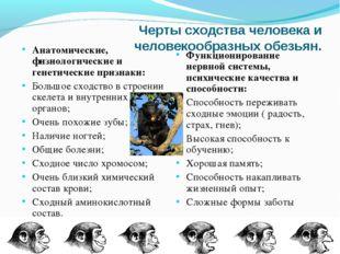 Черты сходства человека и человекообразных обезьян. Анатомические, физиологич