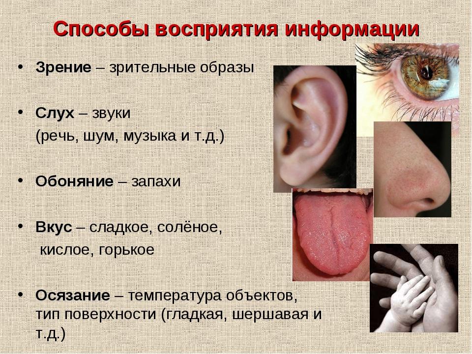 Способы восприятия информации Зрение – зрительные образы Слух – звуки (речь,...