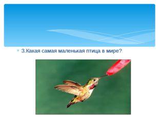 3.Какая самая маленькая птица в мире?