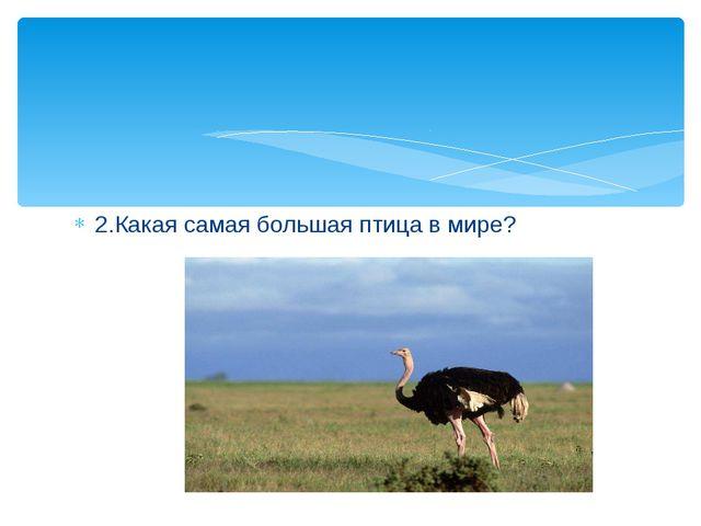 2.Какая самая большая птица в мире?