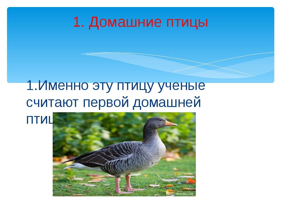 1.Именно эту птицу ученые считают первой домашней птицей. 1. Домашние птицы