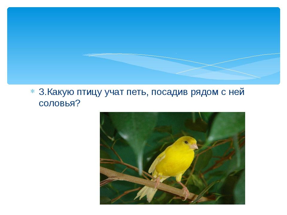 3.Какую птицу учат петь, посадив рядом с ней соловья?
