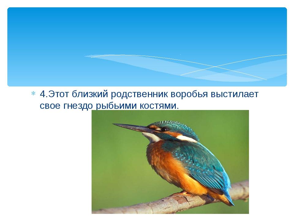 4.Этот близкий родственник воробья выстилает свое гнездо рыбьими костями.