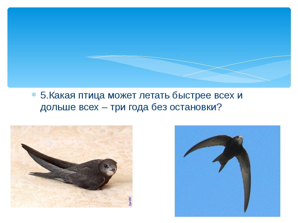 5.Какая птица может летать быстрее всех и дольше всех – три года без остановки?