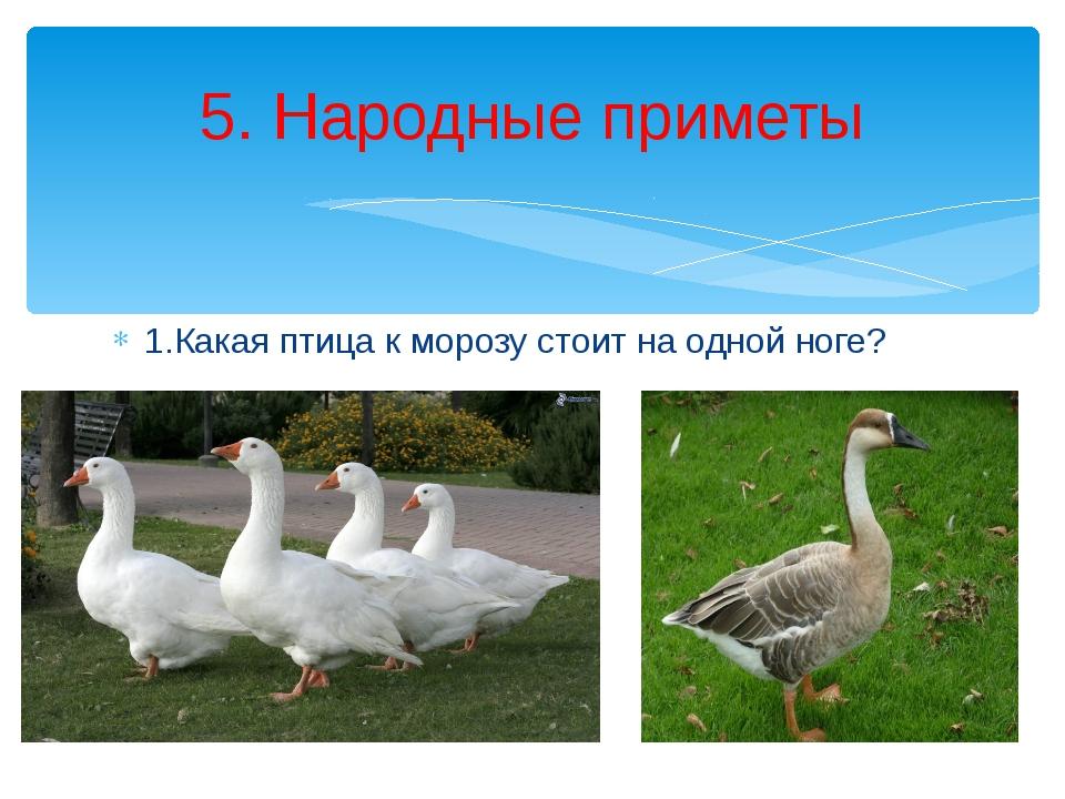 1.Какая птица к морозу стоит на одной ноге? 5. Народные приметы