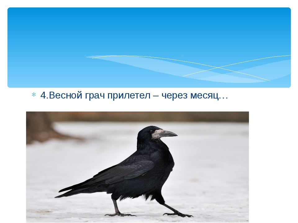 4.Весной грач прилетел – через месяц…