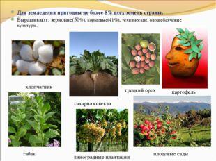 Для земледелия пригодны не более 8% всех земель страны. Выращивают: зерновые(