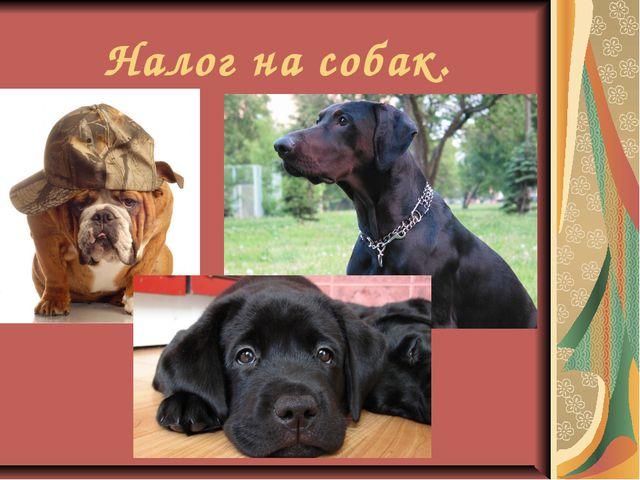 Налог на собак.
