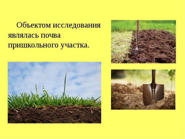 Объектом исследования являлась почва пришкольного участка.