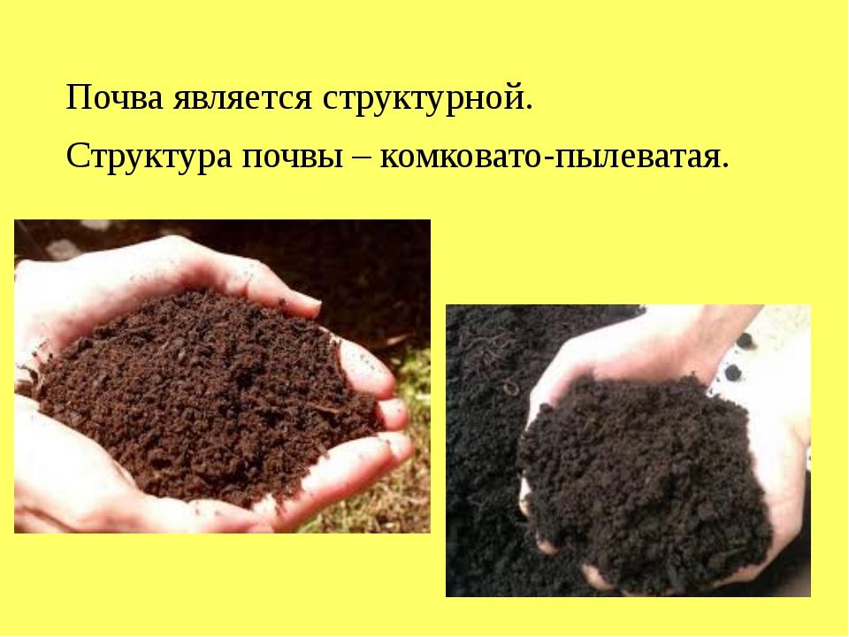 Почва является структурной. Структура почвы – комковато-пылеватая.