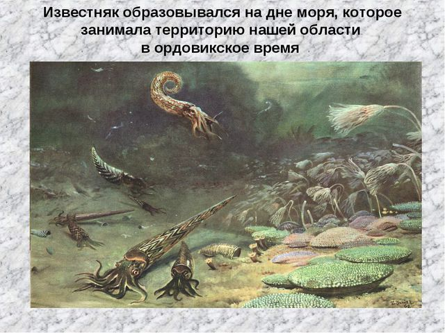 Известняк образовывался на дне моря, которое занимала территорию нашей област...
