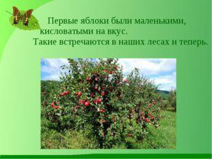 Первые яблоки были маленькими, кисловатыми на вкус. Такие встречаются в наших
